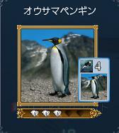 2007.12.10オウサマペンギン発見♪