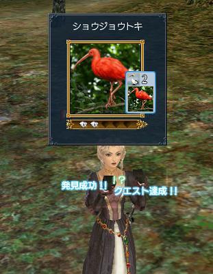 2007.12.13ショウジョウトキ発見♪