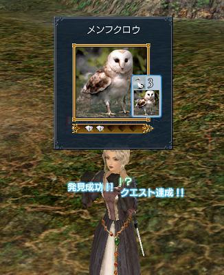 2007.12.13メンフクロウ発見♪